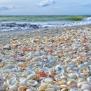 Sanibels Famous Shelling Beach