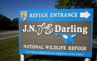 ding_darling